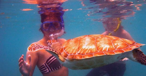 Snorkelers & Turtle