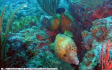 file fish