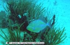 Culebra ReefFish Vol 1 Flicker Share [ Diving Set ]